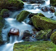Dartmoor Stream by David Clewer