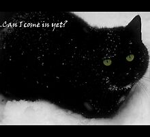 The cat who came in from the cold by Kye Valongo