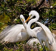 Egrets Build Nest by Kenneth Keifer