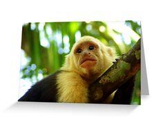 White Capuchin Monkey Greeting Card