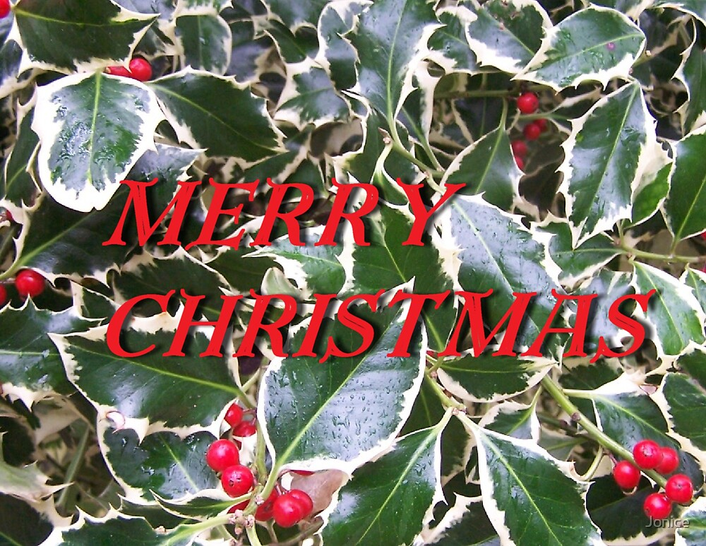 Merry Christmas Holly and Berries Card by Jonice