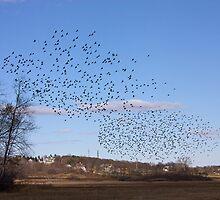 Wheeling Flock by lloydsjourney