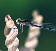 Dragonfly Damselfly Insect Photography Sticker