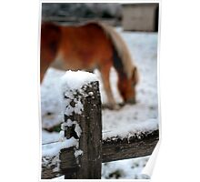 horse fence Poster