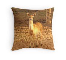 Young Fawn Deer Throw Pillow