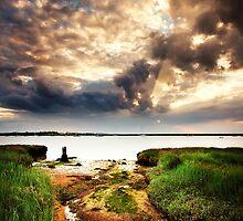 Aldeburgh Wetland 3. by Wayne Bradshaw