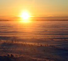 Cold Sunrise by Stephen Thomas
