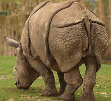 Rhino by Franco De Luca Calce