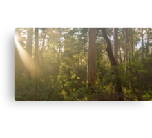 Early Morning at Shannon Canvas Print