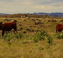 High Country Grazing by D-GaP