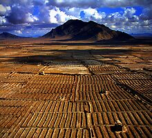 Afghan fields by Whit