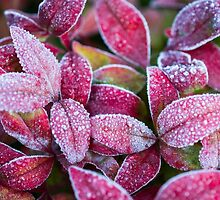 Frost on Red Leaves by Michelle McConnell