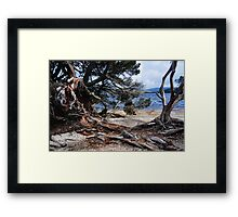 Decaying Wood, Dove Lake Framed Print