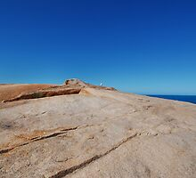 Seagull on Rock by Janet Leadbeater