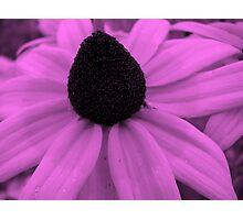 Lavender luscious Photographic Print