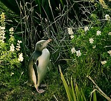 Yellow Eyed Penguin - Oamaru by Trishy