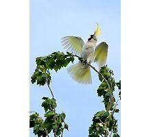 Wild Cockatoo Photographic Print