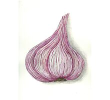 Garlic. series vegetables. Photographic Print