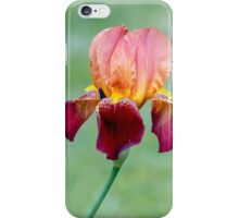 Colorful Bearded Iris iPhone Case/Skin