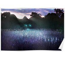 Wisplight - Reeds Poster