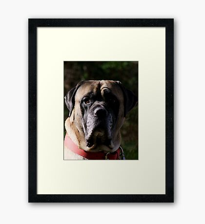 Gentle Hero Framed Print
