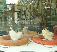 Tarlo & Graham - Chicken Dinner by skyhorse