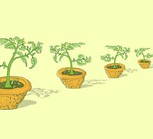 Potted Tomato Plants by CoreyVanHoosen