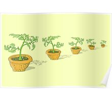 Potted Tomato Plants Poster