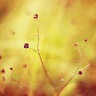 Untitled by Shilpa Shenoy