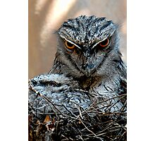 Tawny Frogmouth and baby Photographic Print