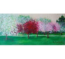 Parkland Blossoms Photographic Print