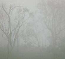 misty morn by Maria Catalina Wiley
