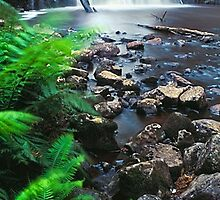 Halcyon Flow, Dip River Forest Reserve TAS by Chris Munn