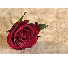 'Tis the last rose of summer Photographic Print