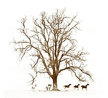 Tree & Horses ... an image I captured on film from the '80s Photographic Print