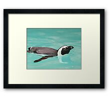 Young Penguin In Pool Framed Print