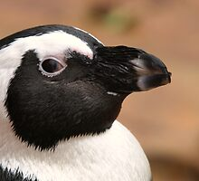Young Penguin Profile by Franco De Luca Calce
