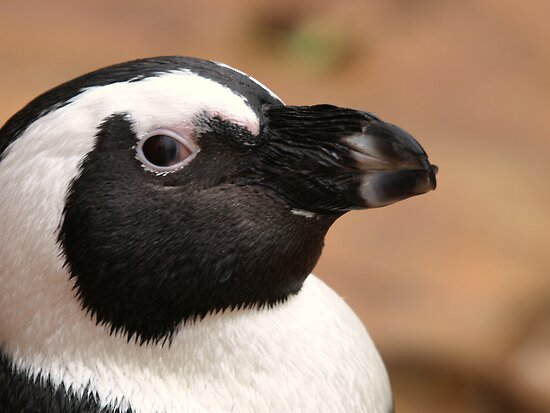 Young Penguin Profile by Franco De Luca Calce