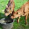 *Feature Page/Farm Animal - Everyday Life*