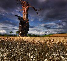 Field of dreams by Douglas  Latham