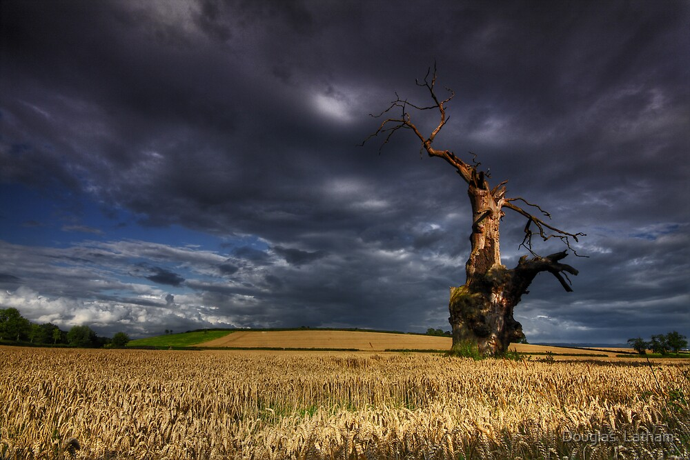 Weathered By Nature by Douglas  Latham