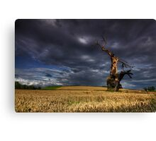 Weathered By Nature Canvas Print