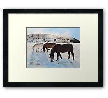 Highland Ponies Framed Print