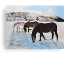 Highland Ponies Canvas Print
