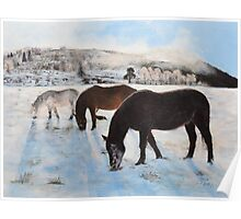 Highland Ponies Poster