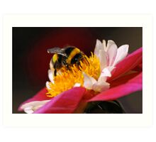 Bumble-Bee in the Spotlight Art Print