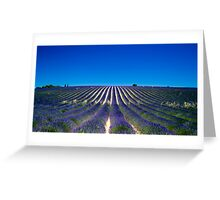 Lavander fields Greeting Card