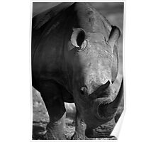 Rhino head to head Poster