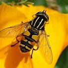 Hover Fly by Barrie Woodward