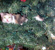 Cali...in the tree... by Sheila  Pasket